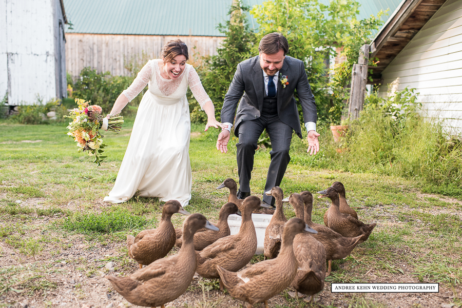 ducks at a maine wedding